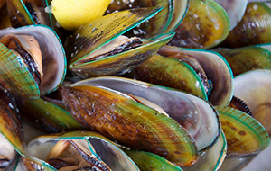 image of a green lip mussels