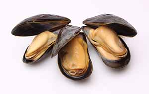 image of holland mussel