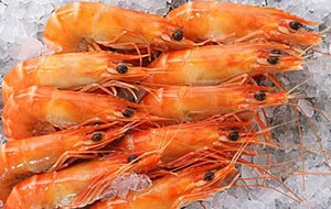 image of king prawns