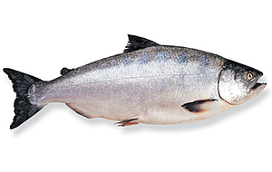 image of a king salmon fish