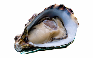 image of coffin bay oyster
